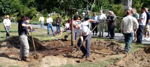 Digging in the root mass.  It's important to pack the soil directly under the tree's trunk, to eliminate air holes and ensure against settling of the tree lower in its hole over time.