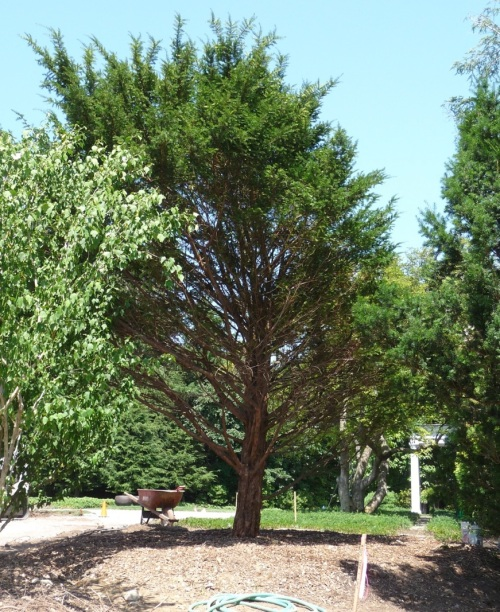 The following week: Taxus in a new spot, looking relaxed and healthy