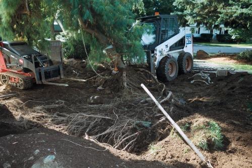 veron white pine digging 3
