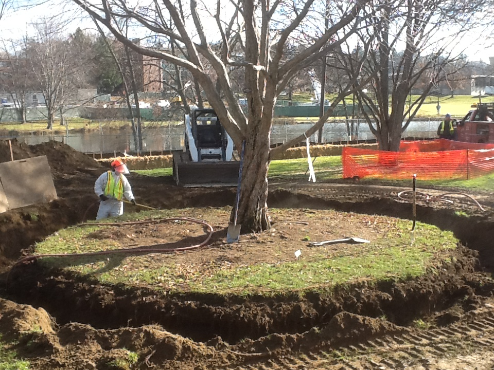 Landscaping Around Trees With Big Roots : Moving maturity