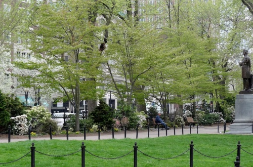 Boylston Street Border Pilot Area, Boston Public Garden, renovated in 2013 and blooming in Spring 2014.  First we had all trees and shrubs pruned, and then we transplanted broadleaf and needled evergreens, added benches, improved drainage, and augmented existing plantings with more evergreen and deciduous shrubs, hosta and astilbe, and thousands of spring bulbs and ephemerals.  Renovation will continue until the entire 840-foot long border has been rehabilitated.